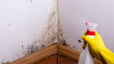 best black mould remover