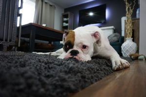 best carpet deodorizer